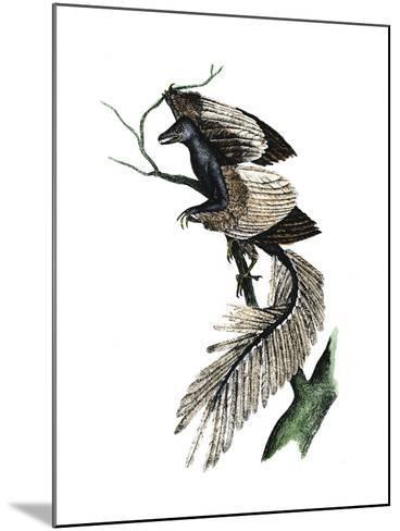 Archaeopteryx - the First Bird, 1886--Mounted Giclee Print