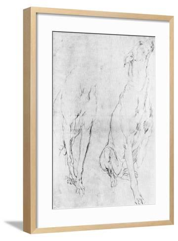 Study for the Greyhound in the Portrait of the Duke of Richmond, C1634-Sir Anthony Van Dyck-Framed Art Print