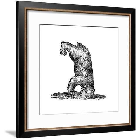 A Bear Standing on His Head, 14th Century--Framed Art Print