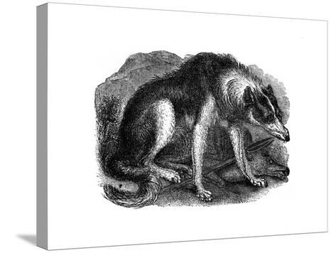 Wolf Dog, 1848--Stretched Canvas Print