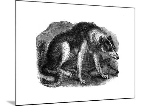 Wolf Dog, 1848--Mounted Giclee Print