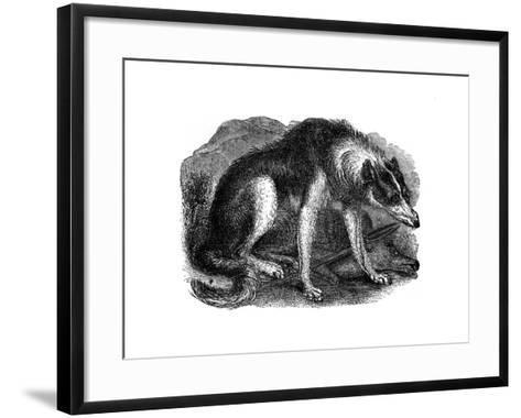 Wolf Dog, 1848--Framed Art Print