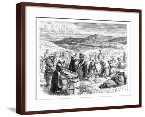 Cape Cod Women Picking and Sorting Cranberries, 1875--Framed Art Print