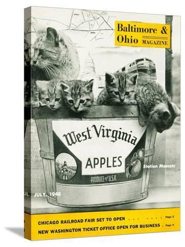 West Virginia Apples--Stretched Canvas Print