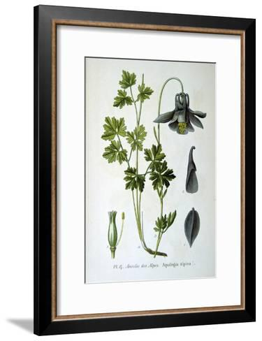 Alpine Columbine, 1893--Framed Art Print