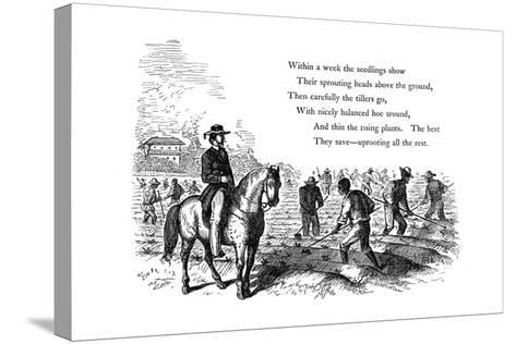Negro Labourers Weeding Cotton under the Eyes of a Mounted White Overseer, Southern States of USA--Stretched Canvas Print
