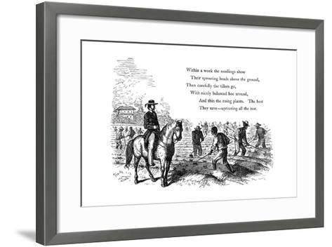 Negro Labourers Weeding Cotton under the Eyes of a Mounted White Overseer, Southern States of USA--Framed Art Print