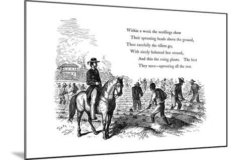 Negro Labourers Weeding Cotton under the Eyes of a Mounted White Overseer, Southern States of USA--Mounted Giclee Print