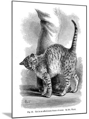 A Cat in Affectionate Frame of Mind, from the Expression and Emotions in Man and Animals, 1872--Mounted Giclee Print