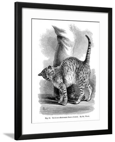A Cat in Affectionate Frame of Mind, from the Expression and Emotions in Man and Animals, 1872--Framed Art Print