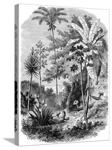 View of the Spanish Main, Guatemala, 1877--Stretched Canvas Print