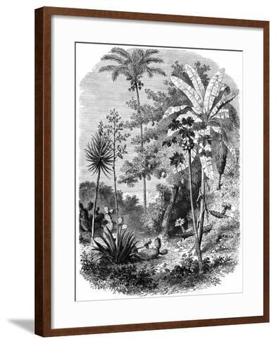 View of the Spanish Main, Guatemala, 1877--Framed Art Print
