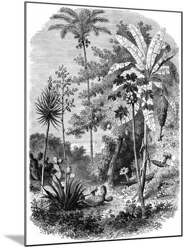 View of the Spanish Main, Guatemala, 1877--Mounted Giclee Print