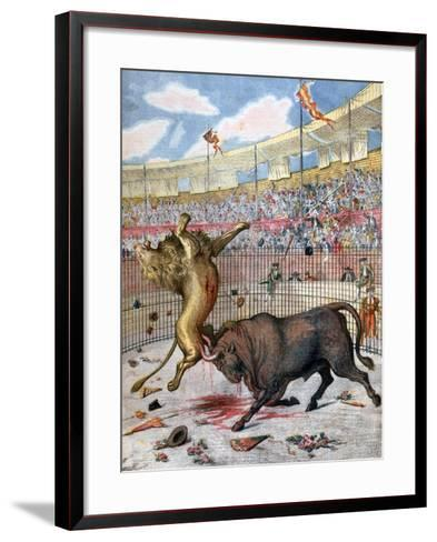 Combat Between a Lion and a Bull, Spain, 1894--Framed Art Print