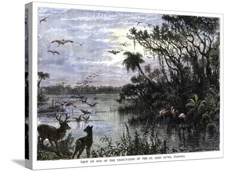 View on One of the Tributaries of the St John River, Florida, 19th Century--Stretched Canvas Print