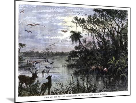 View on One of the Tributaries of the St John River, Florida, 19th Century--Mounted Giclee Print