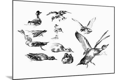 Wild Ducks, 1901-Felix Braquemond-Mounted Giclee Print