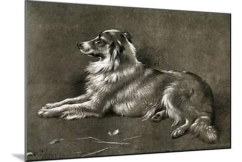 A Sheep Dog, 1901-Walter Hunt-Mounted Giclee Print