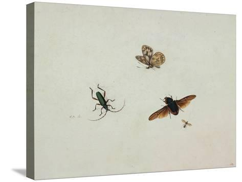 Four Insects, End of 17th C-Johannes Bronkhorst-Stretched Canvas Print