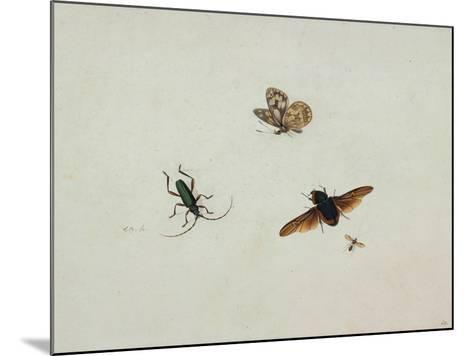 Four Insects, End of 17th C-Johannes Bronkhorst-Mounted Giclee Print