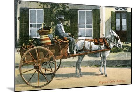 A Vegetable Dealer, Bermuda, C1900s--Mounted Giclee Print