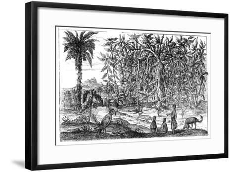 Fig Trees, 19th Century--Framed Art Print