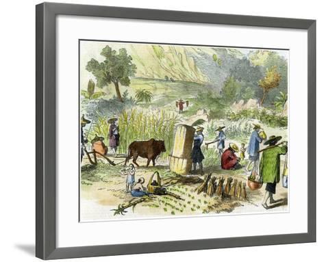 Chinese Harvest, Hong Kong, C1875--Framed Art Print
