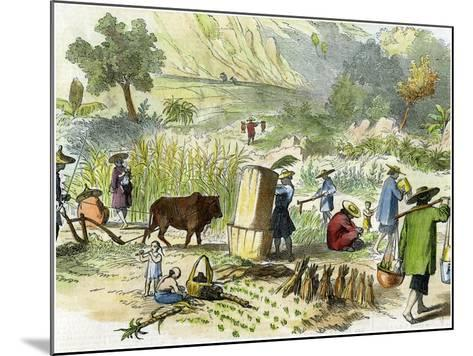 Chinese Harvest, Hong Kong, C1875--Mounted Giclee Print