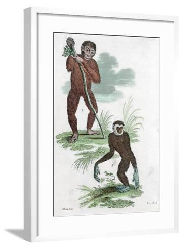 Orang Utang and Gibbon, 1822--Framed Art Print