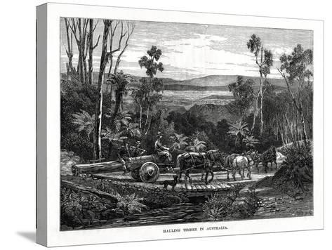 Hauling Timber, Australia, 1877--Stretched Canvas Print