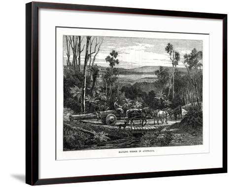 Hauling Timber, Australia, 1877--Framed Art Print