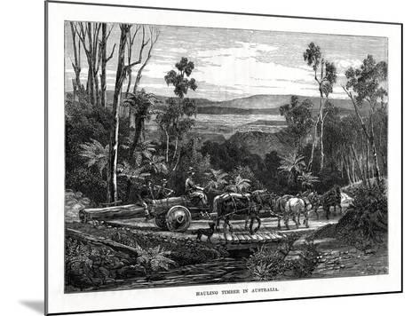 Hauling Timber, Australia, 1877--Mounted Giclee Print
