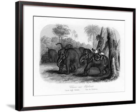 Elephant Hunt, India, C1840--Framed Art Print