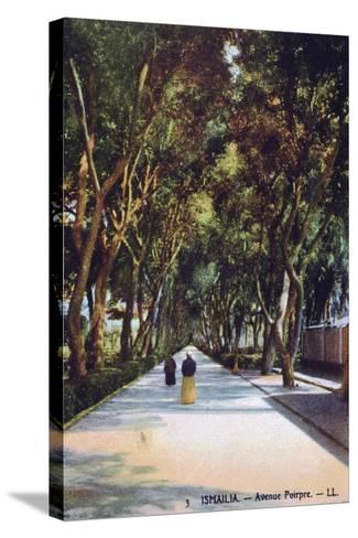 Avenue Poirpre, Ismailia, Egypt, C1900--Stretched Canvas Print