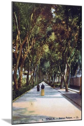Avenue Poirpre, Ismailia, Egypt, C1900--Mounted Giclee Print