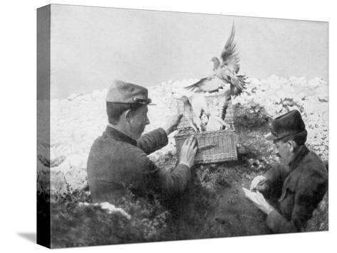 Messenger Pigeons Being Released at the Front Line, World War I, 1915--Stretched Canvas Print