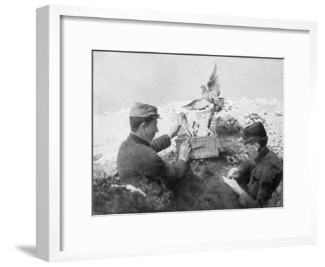 Messenger Pigeons Being Released at the Front Line, World War I, 1915--Framed Art Print