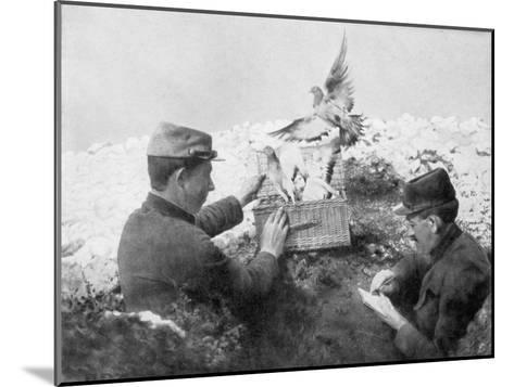Messenger Pigeons Being Released at the Front Line, World War I, 1915--Mounted Giclee Print