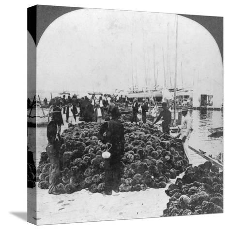 Sponge Market, Key West Harbour, Florida, USA, C1900--Stretched Canvas Print