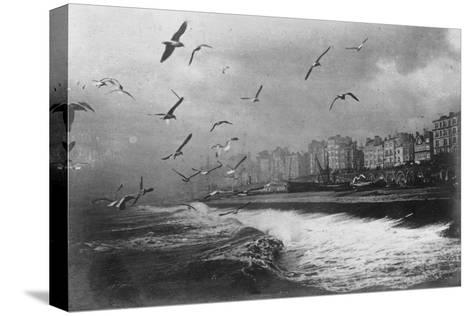 Gulls at Brighton, East Sussex, Early 20th Century--Stretched Canvas Print