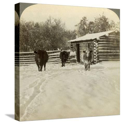 Winter on a Ranch, Montana, Usa-Underwood & Underwood-Stretched Canvas Print