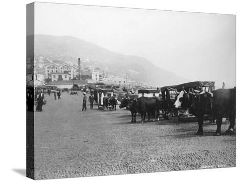 Bullock Carriages, Madeira, Portugal, C1920s-C1930s--Stretched Canvas Print