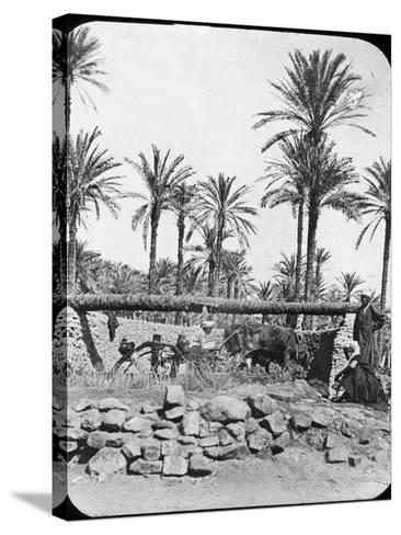 Water Wheel, Egypt, C1890-Newton & Co-Stretched Canvas Print