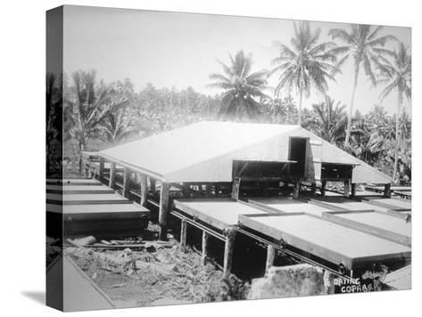 Drying Copra, Solomon Island, Fiji, 1905--Stretched Canvas Print