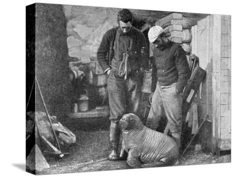 Walrus Cub, 1899-Frederick George Jackson-Stretched Canvas Print