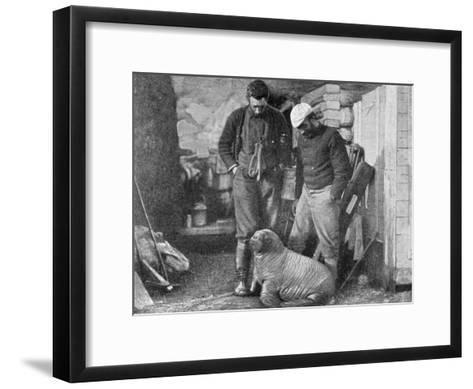 Walrus Cub, 1899-Frederick George Jackson-Framed Art Print