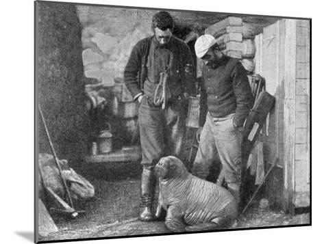 Walrus Cub, 1899-Frederick George Jackson-Mounted Giclee Print