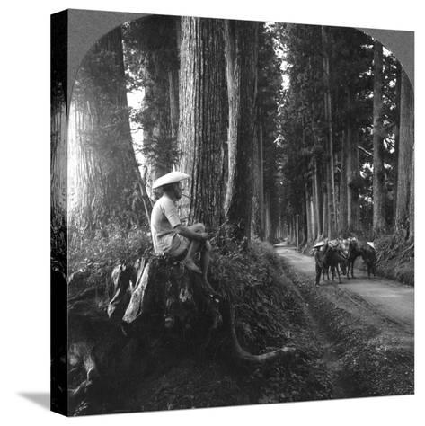 The Sacred Road to Nikko, Japan, 1905-BL Singley-Stretched Canvas Print
