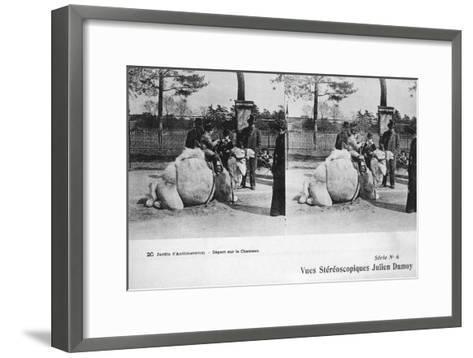 Camel Ride, Zoological Gardens, C1900-Julien Damoy-Framed Art Print