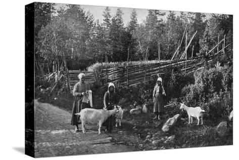 Goat Farming in Dalarna, Sweden, 1908-1909-Wald Zachrisson-Stretched Canvas Print